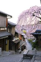京都府 しだれ桜咲く朝の三年坂の町並み