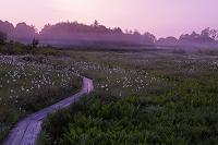 福島県 駒止湿原