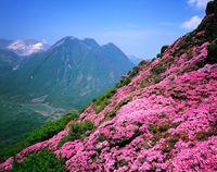 大分県 三俣山