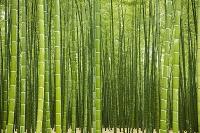 栃木県 竹林