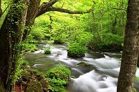 青森県 十和田市 奥入瀬渓流