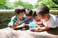 カブトムシを観察する小学生たち
