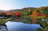 京都府 天龍寺 朝日に輝く曹源池の紅葉と嵐山