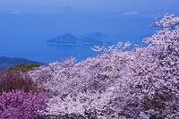 香川県 紫雲出山の桜と瀬戸内海
