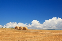 北海道 美瑛町 収穫が終わった麦畑