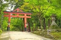 滋賀県 新緑の日吉大社