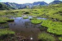富山県 高層湿原と地塘