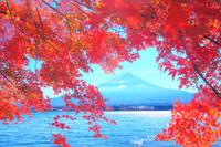 山梨県 富士山と紅葉