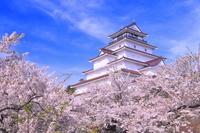 福島県 桜の咲く鶴ヶ城