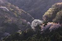 岐阜県 霞間ヶ渓