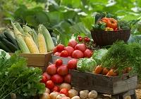 新鮮野菜いろいろ