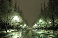 雪の銀杏並木のライトアップ