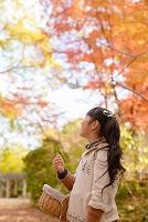 公園の日本人の子供 松ぼっくりや落葉を拾う