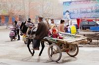 中国 ウイグル自治区 ウルムチ ロバ車