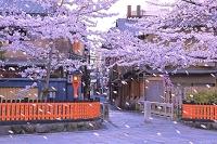 京都府 桜咲く春の祇園