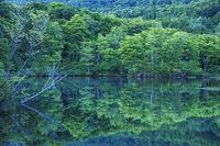 山形県  地蔵沼の新緑