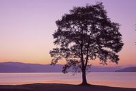 北海道 洞爺湖の夜明けと一本木