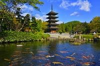 宮城県 定義山 鯉と五重塔