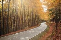 ドイツ ミッヒェルシュタット 道路