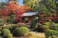 京都府 随心院 奥書院から見る庭園の紅葉と小野堂
