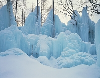凍る木々、氷点下の森