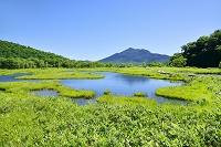 群馬県 上田代の池塘と燧ヶ岳