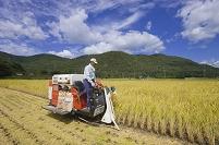 農業 稲刈り
