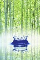 竹林と水滴