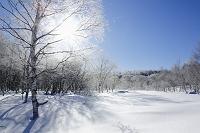 長野県 霧氷