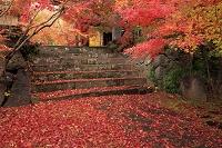 長野県 紅葉の称念寺