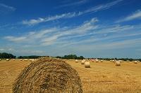 収穫後の麦稈ロール