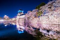 富山県 富山城と満開の夜桜