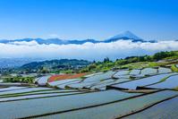 中野の棚田と富士山