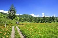 福島県 尾瀬のニッコウキスゲと木道