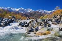 長野県 紅葉の松川と白馬三山(白馬鑓ヶ岳,杓子岳,白馬岳)