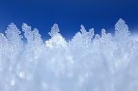 北海道 霜
