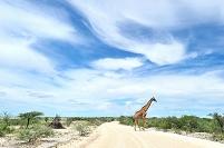 キリン ナミビア