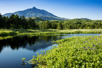 北海道 南浜湿原と利尻岳