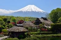 山梨県 富士山と新緑