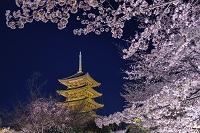 京都府 桜と東寺五重塔