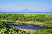 北海道 利尻島と日本海とエゾシカ