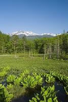 新緑のどじょう池と乗鞍岳