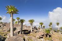 エチオピア シミエン国立公園