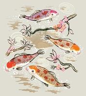イラスト 池を泳ぐ鯉