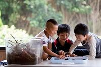 カブトムシと遊ぶ日本人の子供