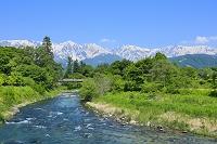長野県 大出の吊橋 新緑の姫川と残雪の北アルプス