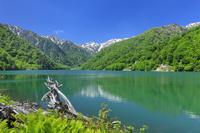 岐阜県 新緑の白水湖と白山