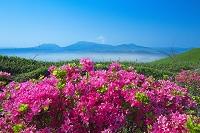 熊本県 ミヤマキリシマ咲く大観峰から望む阿蘇五岳と雲海