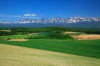 北海道 十勝岳連峰と丘の田園