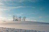 北海道 士別市 雪原